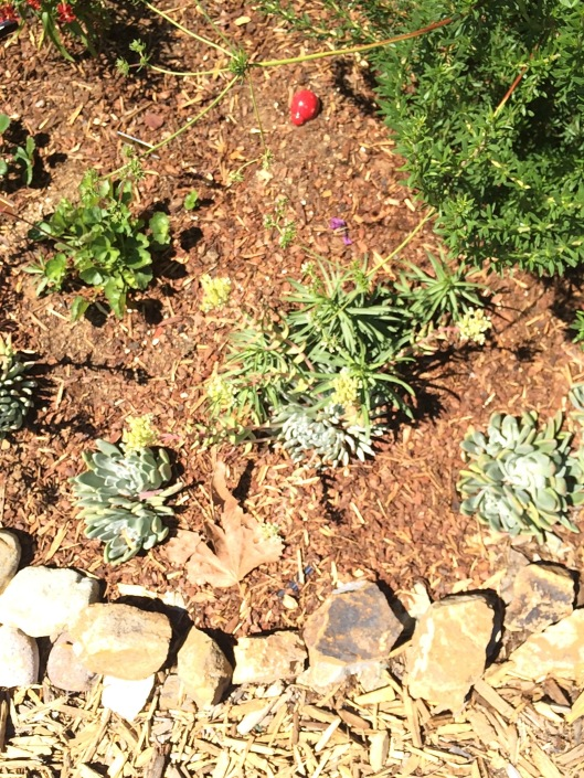 water wise garden Garden of Delights Blog