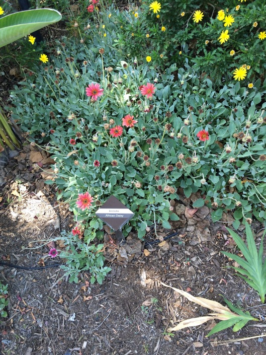 Garden of Delights Blog | Thoughts on gardening and life | Page 2