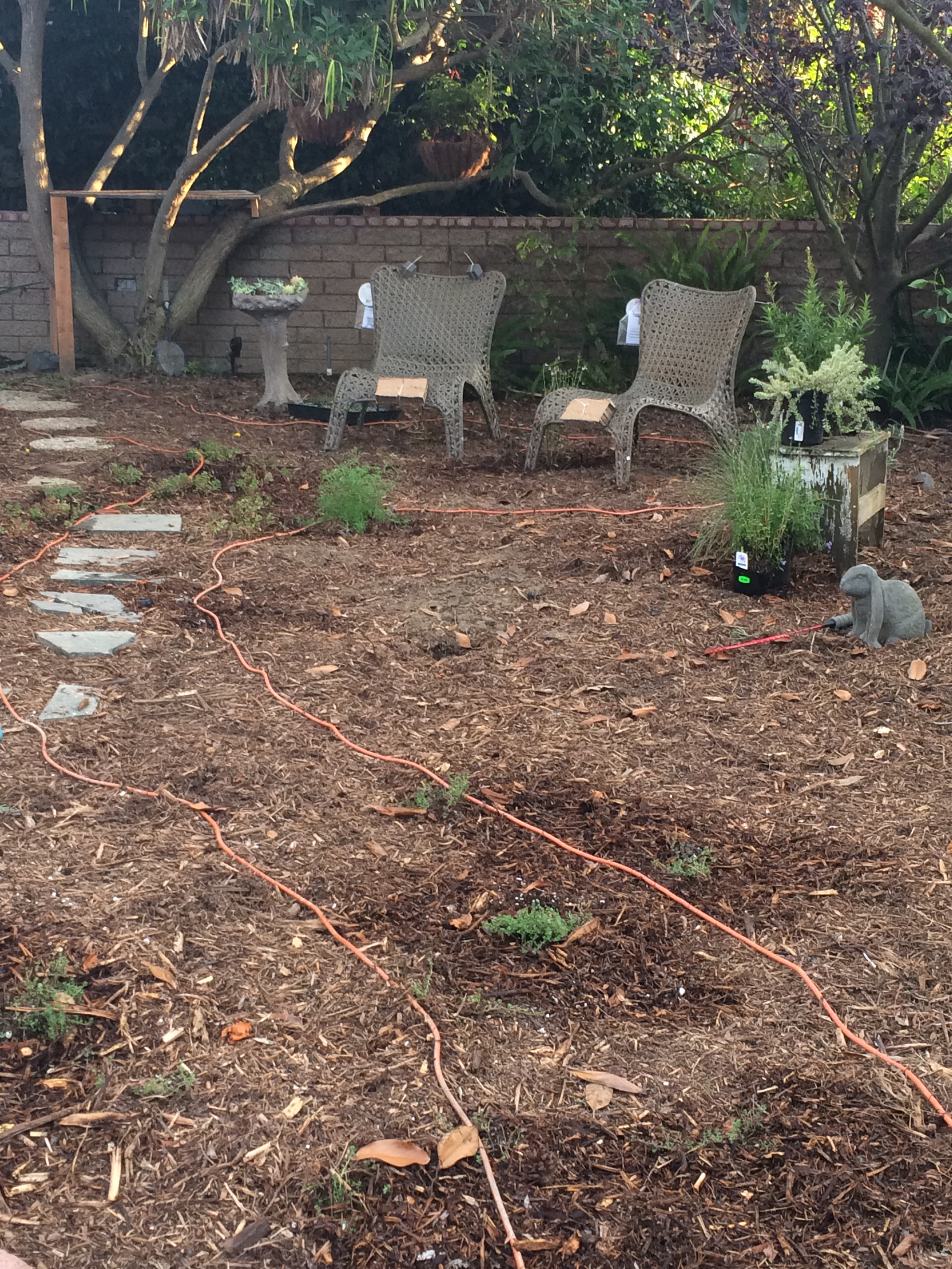 California native plants | Garden of Delights Blog